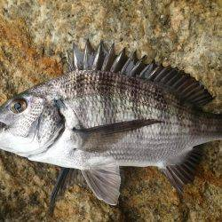 数釣り   山口   釣果情報 堤防 ジギング 船釣 管理釣り場 釣り情報   カンパリ全国版